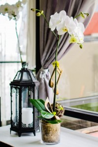 orchids, arrangement, flowers, orchid, white sakura