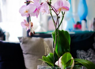 orchids, white sakuras, flowers, delivery, order, flowers